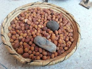 argan nuts 2