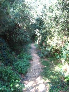 path 01.JPG